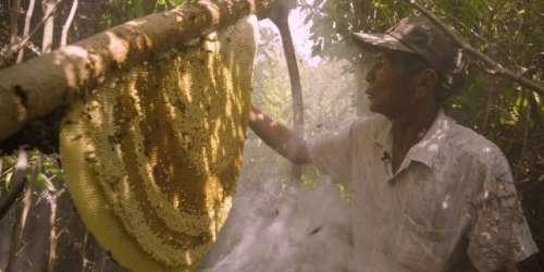 «Une terre sans abeilles?», sur Ushuaïa TV: la terre bourdonne d'idées pour sauver ses ouvrières de la pollinisation