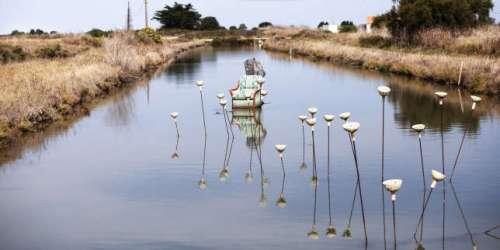 Sur l'île d'Oléron, entre la pasionaria du paysage et le poète des marais, un duel sans fin