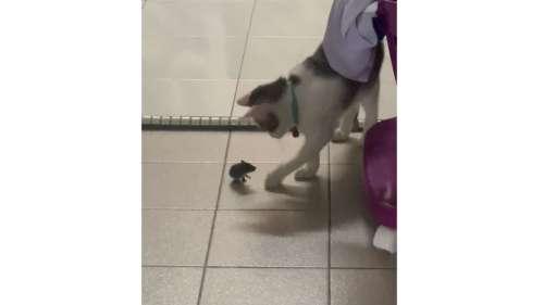 Le vrai jeu du chat et de la souris, ça ressemble à ça!