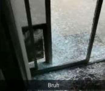 Un chien oublie que la porte vitrée est fermée