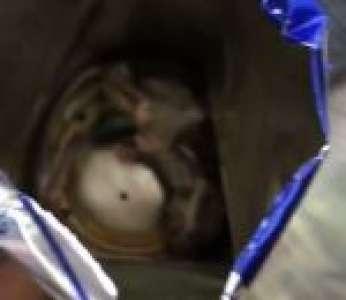 Un homme trouve une souris morte dans une canette de Red Bull (États-Unis)