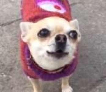 Un chien essaie de hurler en entendant les cloches d'une église