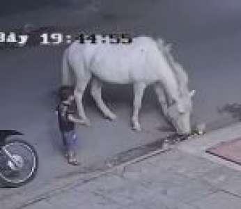 Un cheval donne un coup de sabot à un enfant dans une rue (Vietnam)