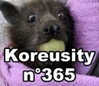 Bon weekend avec Koreusity n°365 un zap de 97 vidéos insolites