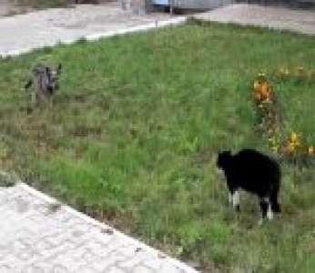 Un duel entre un chien et un chat sur une musique d'Ennio Morricone