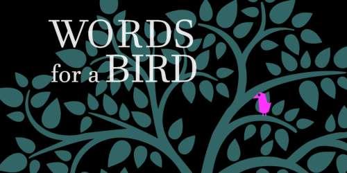 Words for a Bird : trucs et astuces pour vous aider à progresser