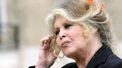 Mort d'Elisa Pilarski : Brigitte Bardot vole au secours du chien Curtis