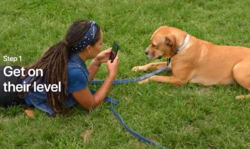 Today At Apple : des petits conseils pour bien photographier ses animaux de compagnie