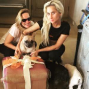 Lady Gaga : Son dog-sitter toujours hospitalisé, son état de santé s'est aggravé, il donne des détails
