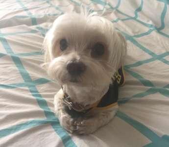 20+ Photos qui vont te donner envie d'adopter un chien tout de suite