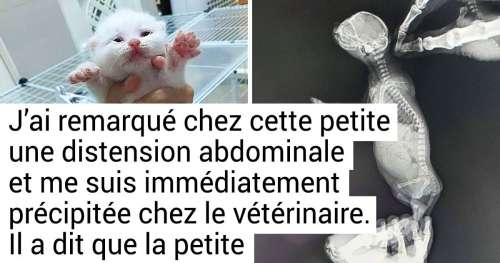 18 Personnes qui en adoptant un animal se sont offertes un mal de tête persistant en prime