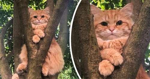 15 Photos de chats qui prouvent une fois de plus qu'on ne pourra jamais les comprendre