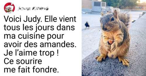 20 Photos d'écureuils qui ont gentiment rendu visite à des internautes
