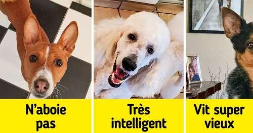 12 Races de chiens qui donnent peu de soucis à leurs propriétaires