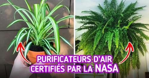 15 Plantes purificatrices d'air que tu devrais avoir chez toi si tu souffres d'allergies