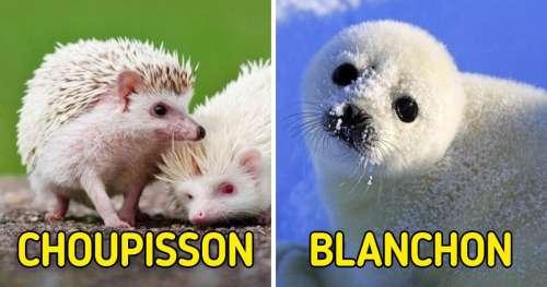 15 Noms de bébés animaux dont on n'a jamais entendu parler