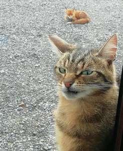 17 Chiens et chats dont les frimousses en disent long