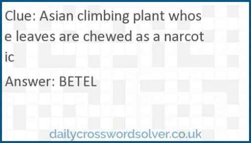 Asian climbing plant whose leaves are chewed as a narcotic crossword answer
