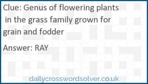 Genus of flowering plants in the grass family grown for grain and fodder crossword answer