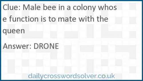 Male bee in a colony whose function is to mate with the queen crossword answer