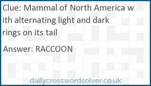 Mammal of North America with alternating light and dark rings on its tail crossword answer