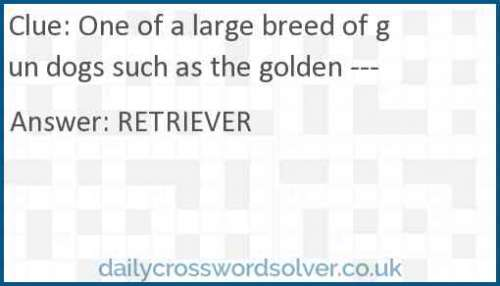 One of a large breed of gun dogs such as the golden --- crossword answer