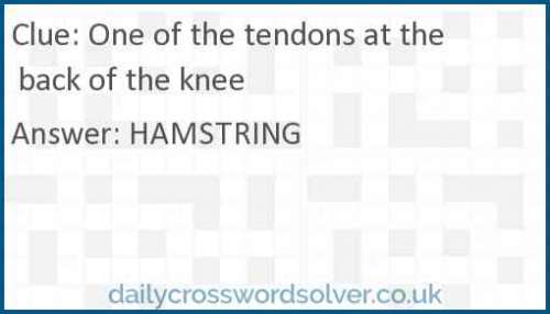 One of the tendons at the back of the knee crossword answer