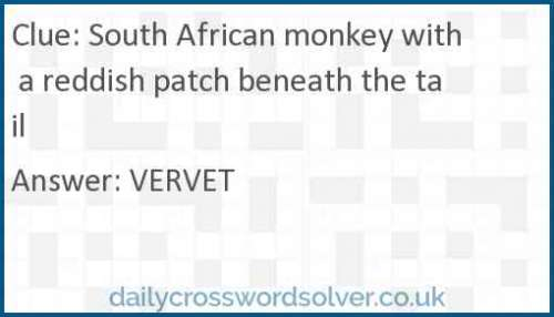 South African monkey with a reddish patch beneath the tail crossword answer