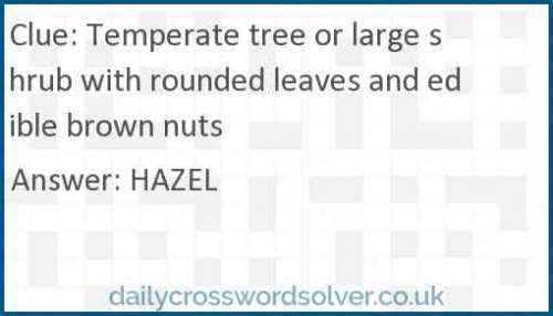Temperate tree or large shrub with rounded leaves and edible brown nuts crossword answer