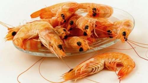 Sel, mollusques, crustacés… Ils n'échappent pas aux plastiques, alerte le magazine