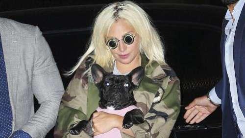 Lady Gaga a retrouvé sains et saufs ses deux chiens volés