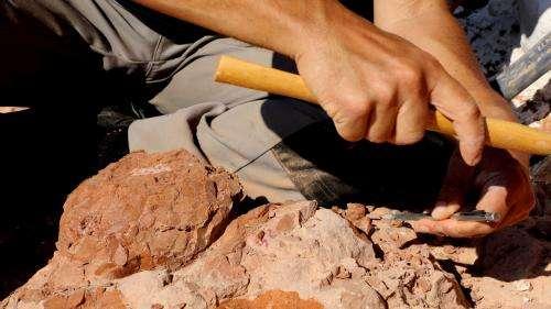 Pour s'occuper en plein confinement, un garçon de 6 ans fouille son jardin et tombe sur un fossile vieux de 500 millions d'années