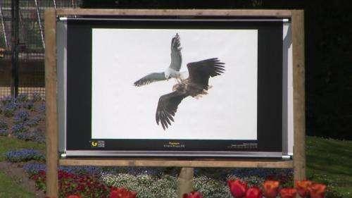 30e Festival de l'oiseau et de la nature : à Abbeville, des photos animalières exposées dans un parc naturel