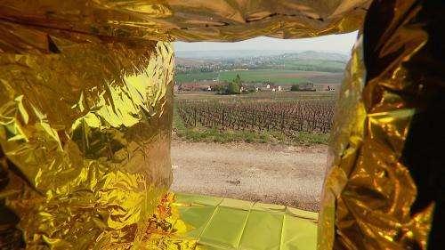 Au festival Vign'Art, 14 œuvres de land art exposées au cœur du vignoble de Champagne