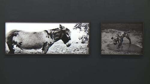 L'univers ombre et lumière du photographe belge Jean-François Spricigo exposé à Pau