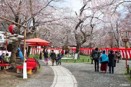 Hirano-jinja - Les cerisiers en fête au nord de Kyoto
