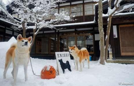 Enishi (avis) - La belle maison aux chiens Akita-inu de Kakunodate