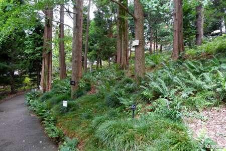 Jardin botanique Akatsuka - La bibliothèque verte d'Itabashi