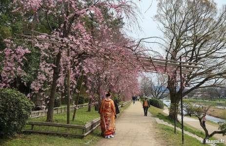 Chemin Nakaragi - Le tunnel de shidare-zakura au nord de Kyoto