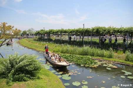 Parc Suigo Sawara Ayame - Le jardin aquatique aux iris près de Tokyo