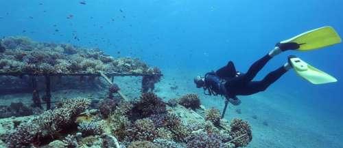 Mer Baltique : des touristes plongeurs à l'assaut d'épaves vieilles de 75 ans