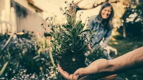 Des chercheurs découvrent que le jardinage est la réponse aux maux de la société