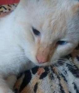 Coronavirus : Des voisins tuent le chien et le chat d'une infirmière en charge de patients malades pour la pousser à quitter le quartier