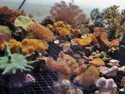 Une molécule issue du corail pour soigner un cancer rare du cerveau @netguide