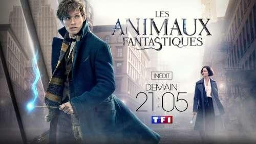 Audiences TV prime dimanche 18 octobre : « Les Animaux Fantastiques » large leader (TF1)